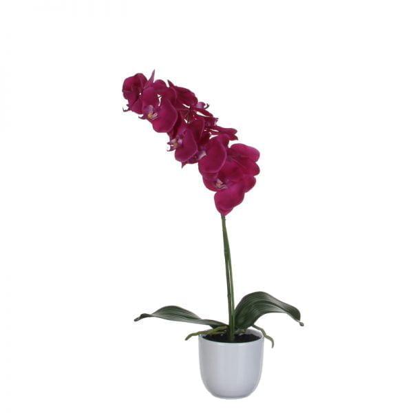 Orchidee-3445