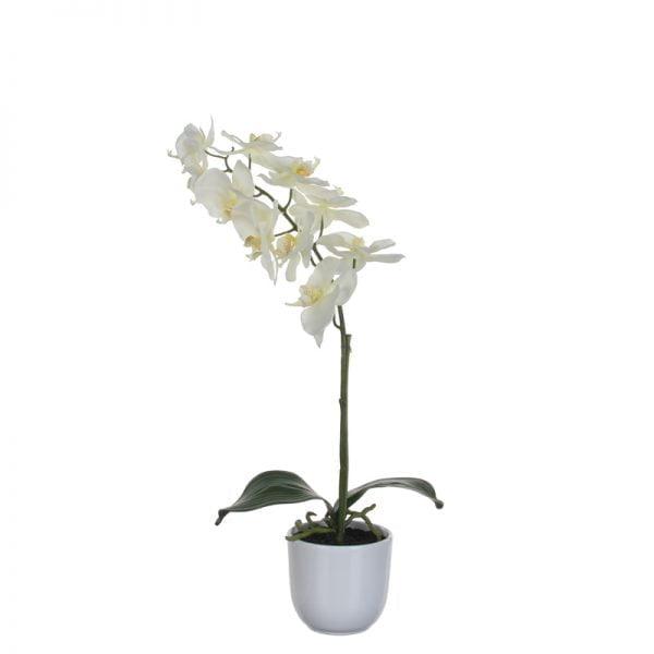 Orchidee-0