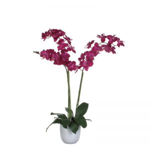 Two-stemmed orchid-0